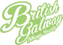 Official British Galway Sheep Society